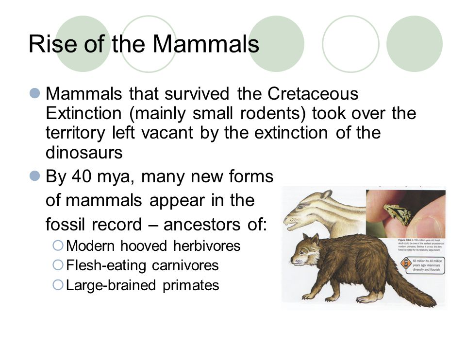 Rise of the Mammals