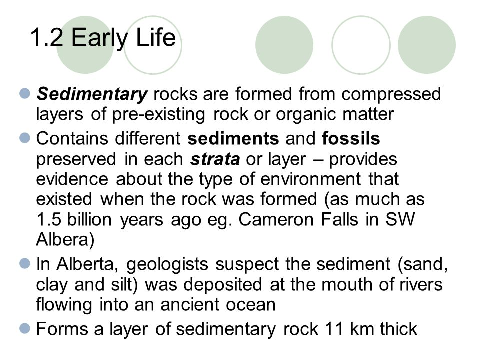 1.2 Early Life Sedimentary rocks are formed from compressed layers of pre-existing rock or organic matter.