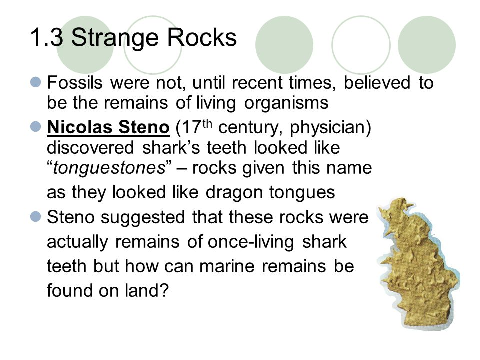 1.3 Strange Rocks Fossils were not, until recent times, believed to be the remains of living organisms.