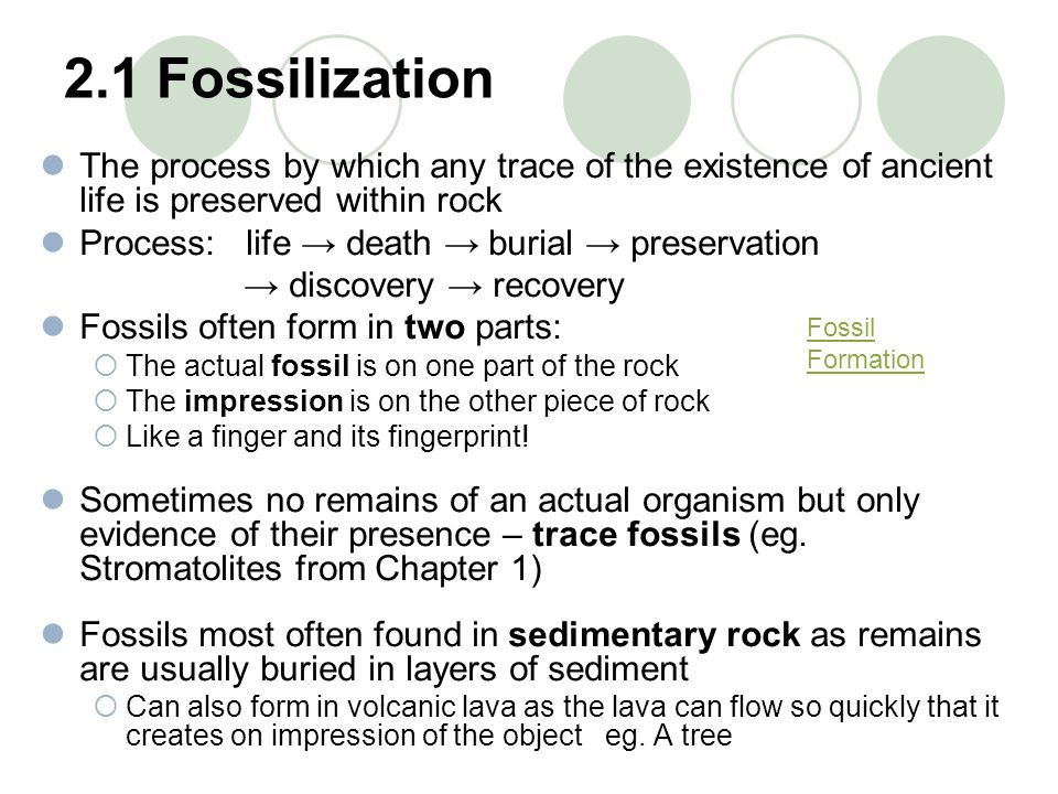 2.1 Fossilization The process by which any trace of the existence of ancient life is preserved within rock.