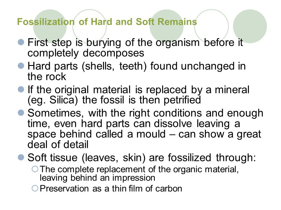 Fossilization of Hard and Soft Remains