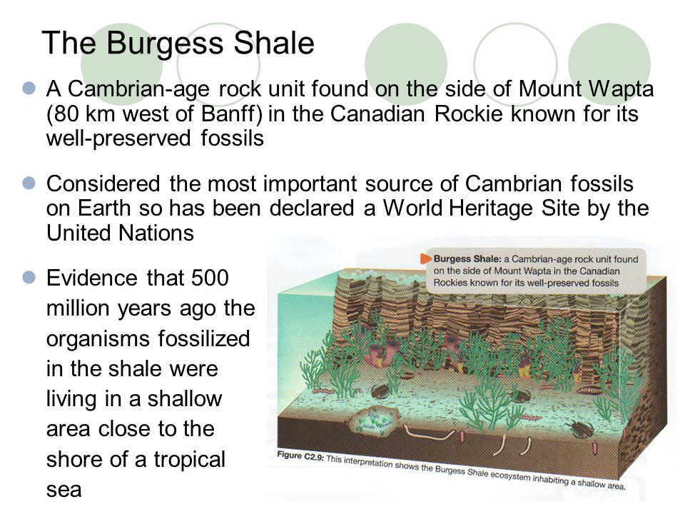 The Burgess Shale