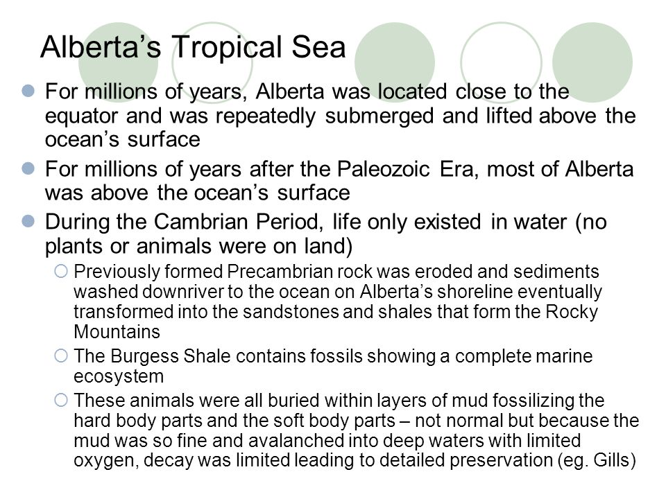 Alberta's Tropical Sea