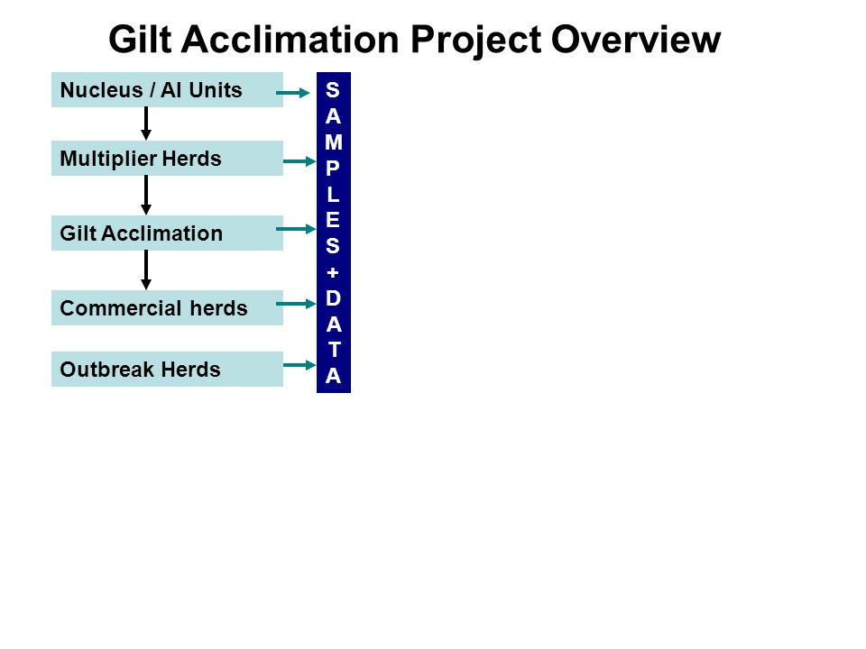 Gilt Acclimation Project Overview