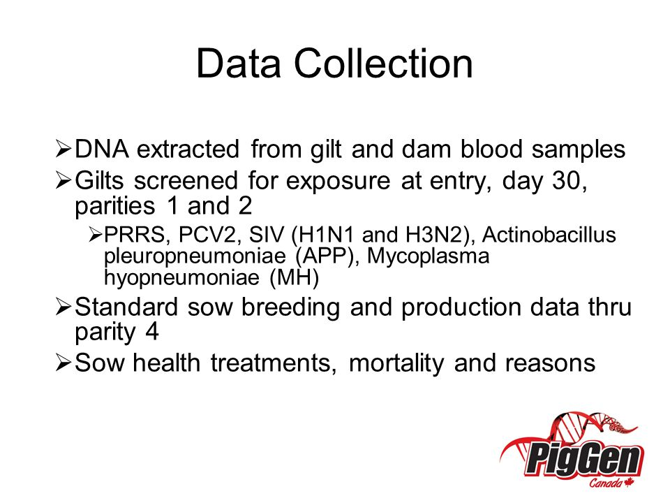 Data Collection DNA extracted from gilt and dam blood samples