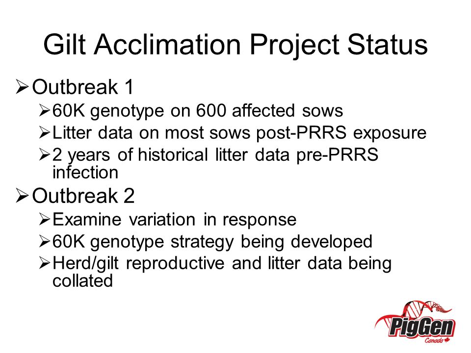 Gilt Acclimation Project Status