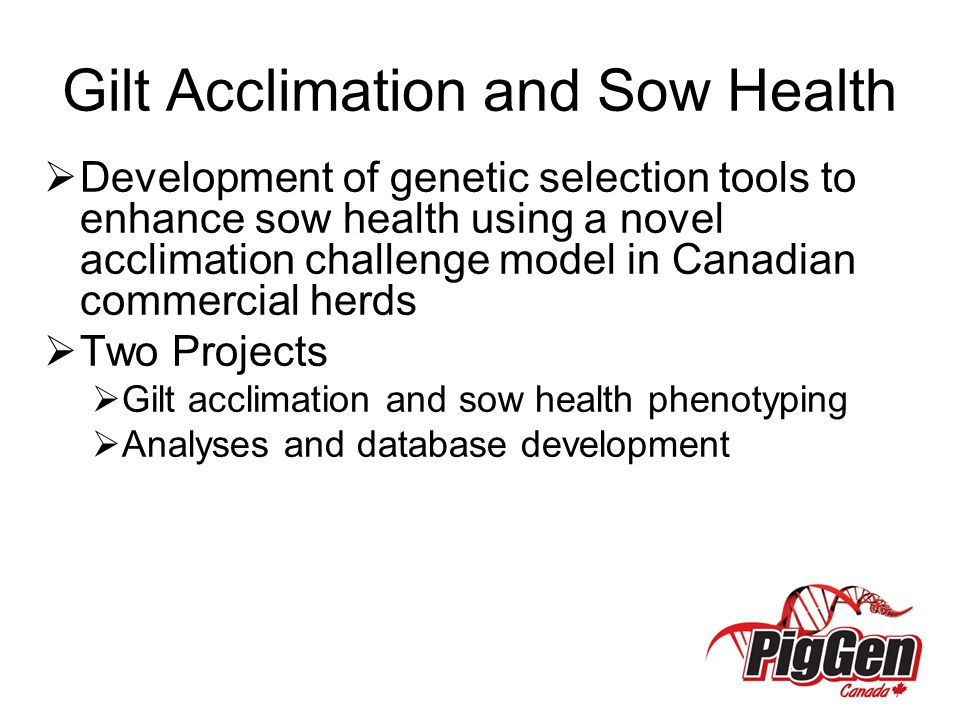 Gilt Acclimation and Sow Health