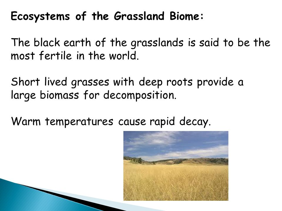 Ecosystems of the Grassland Biome: