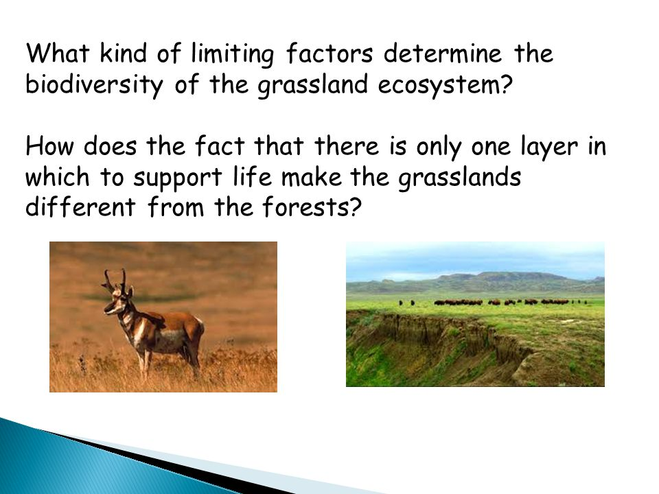 What kind of limiting factors determine the biodiversity of the grassland ecosystem