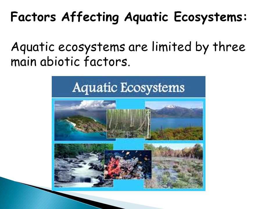 Factors Affecting Aquatic Ecosystems: