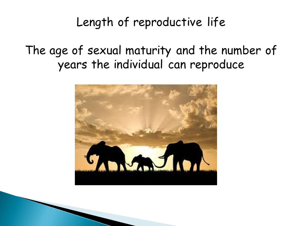 Length of reproductive life