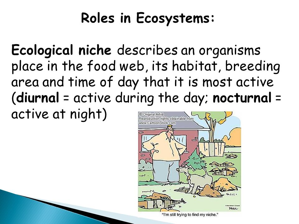 Roles in Ecosystems: