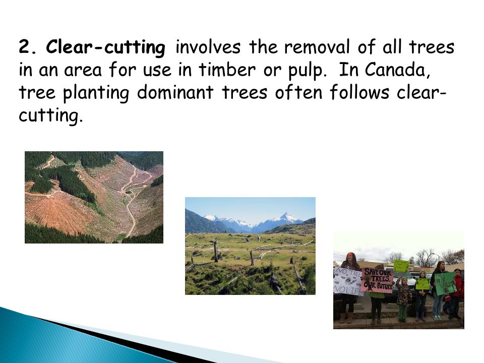 2. Clear-cutting involves the removal of all trees in an area for use in timber or pulp.
