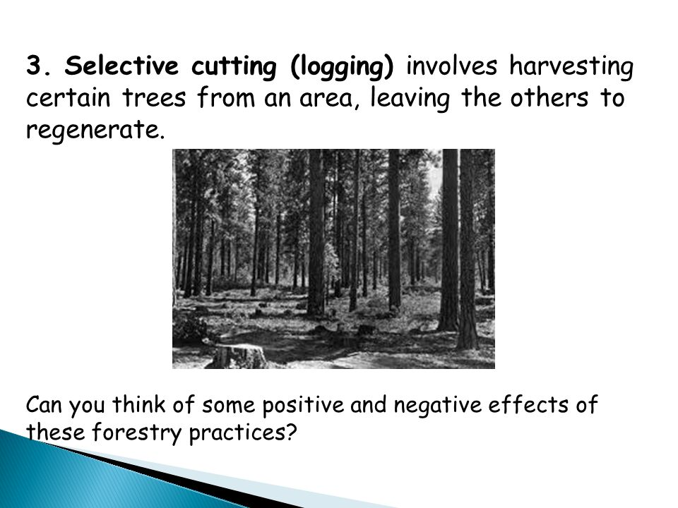 3. Selective cutting (logging) involves harvesting certain trees from an area, leaving the others to regenerate.
