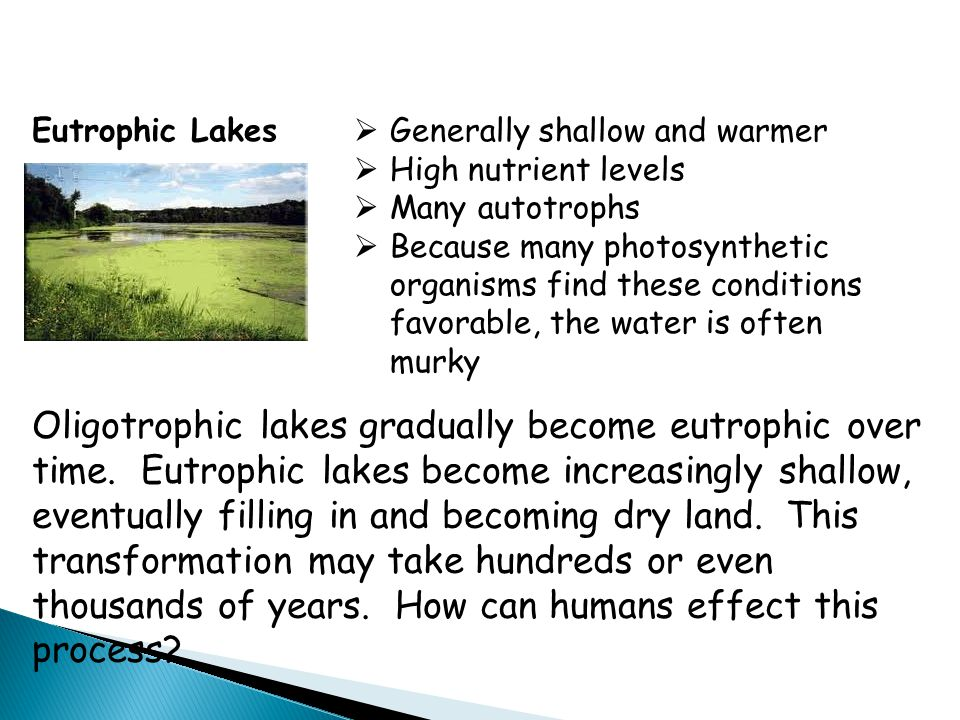 Eutrophic Lakes Generally shallow and warmer. High nutrient levels. Many autotrophs.