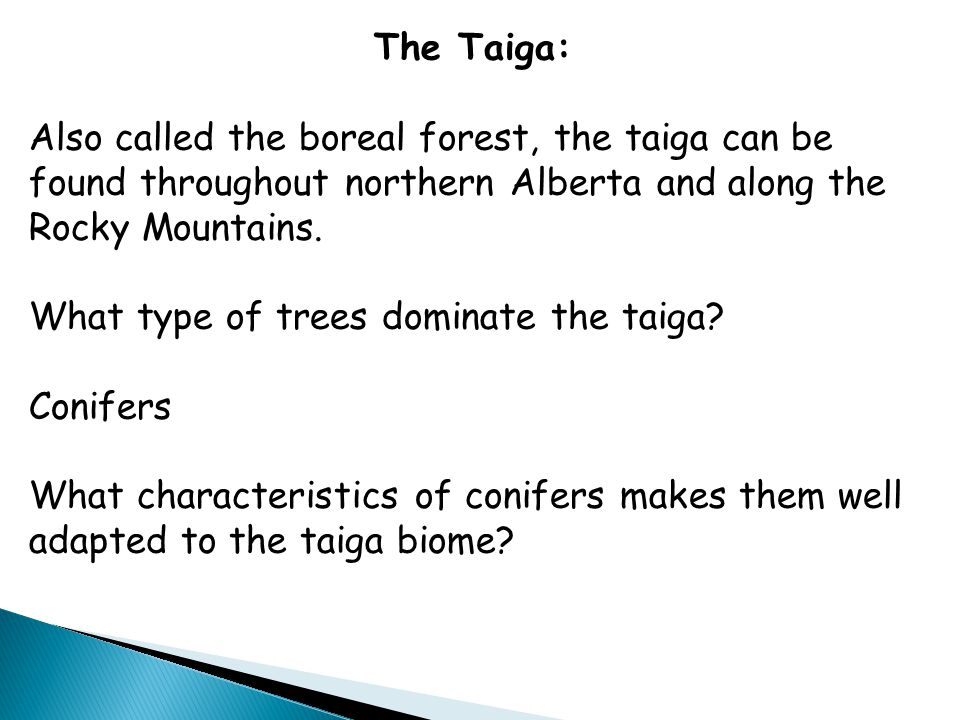 The Taiga: Also called the boreal forest, the taiga can be found throughout northern Alberta and along the Rocky Mountains.