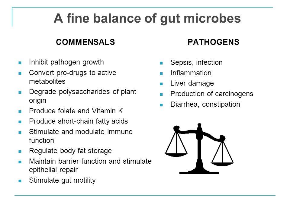 A fine balance of gut microbes