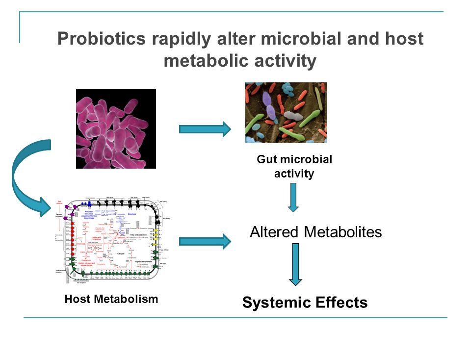 Probiotics rapidly alter microbial and host metabolic activity