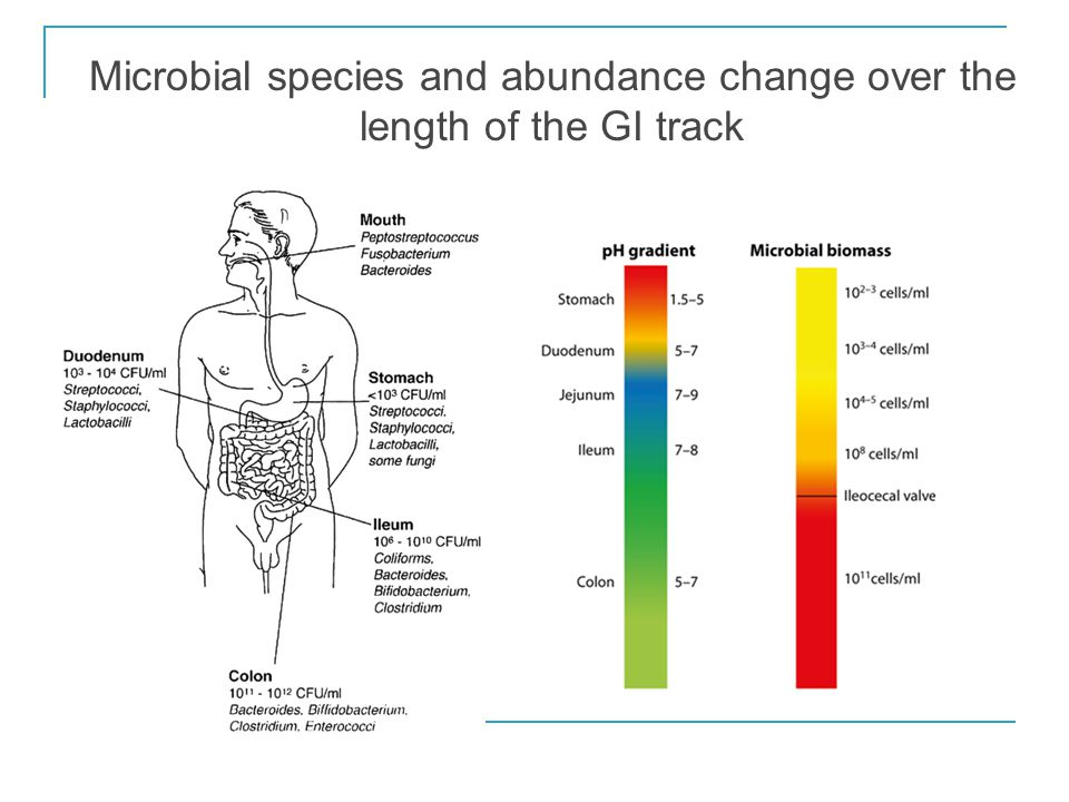 Microbial species and abundance change over the length of the GI track