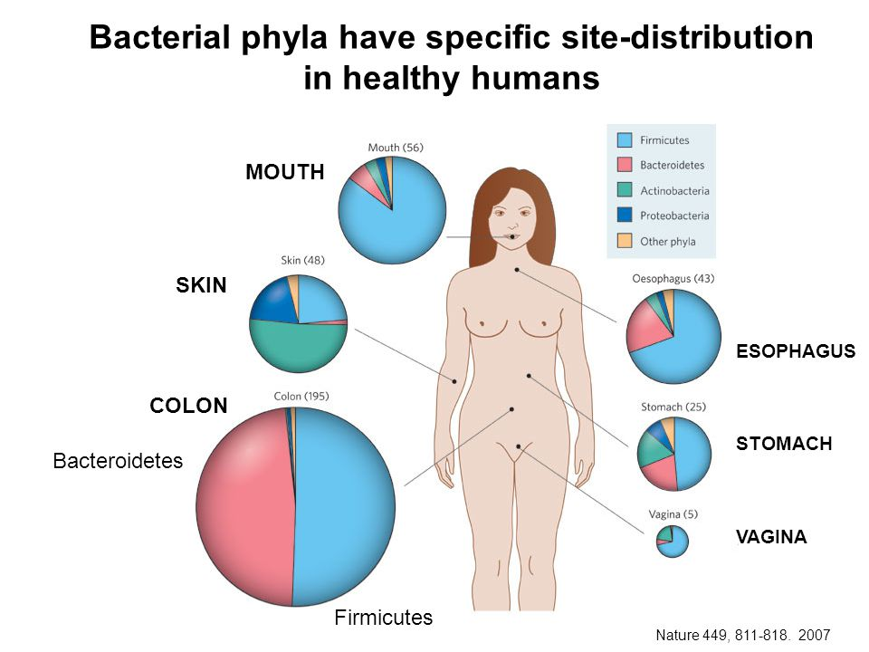 Bacterial phyla have specific site-distribution in healthy humans