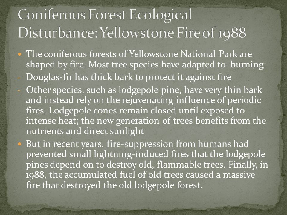 Coniferous Forest Ecological Disturbance: Yellowstone Fire of 1988