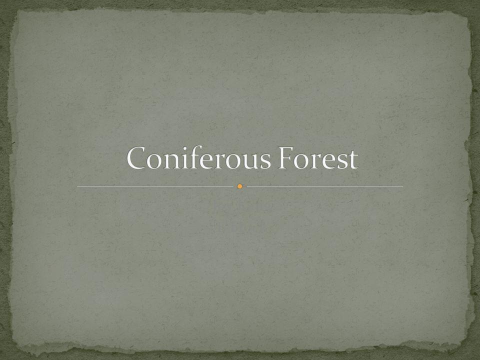 Coniferous Forest Joy Kang E block
