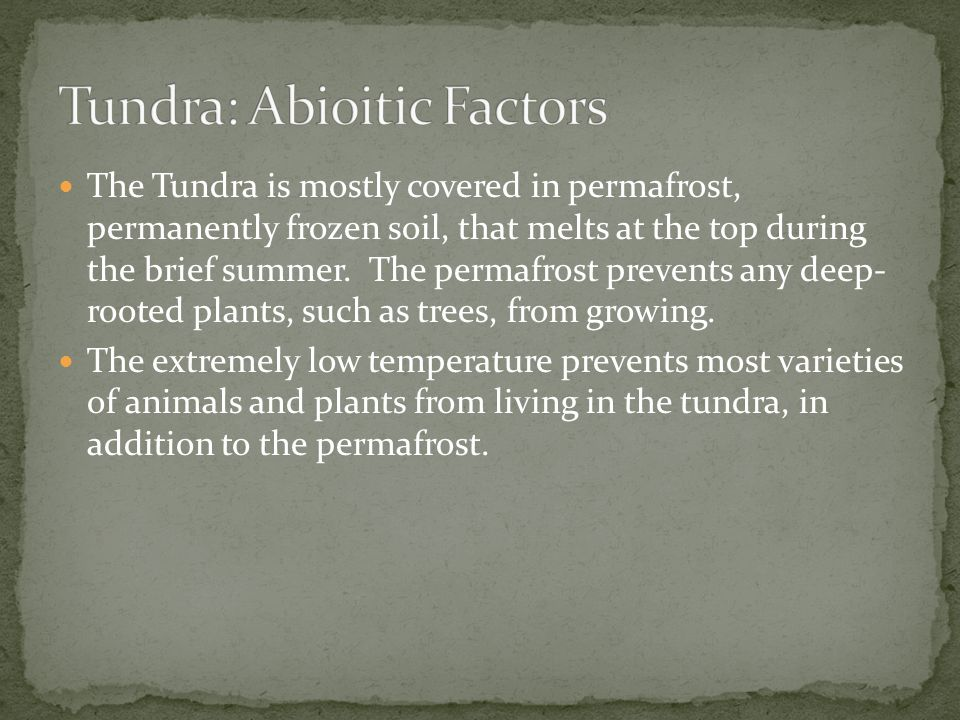 Tundra: Abioitic Factors