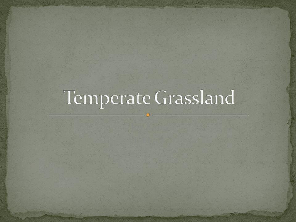 Temperate Grassland Joy Kang E block