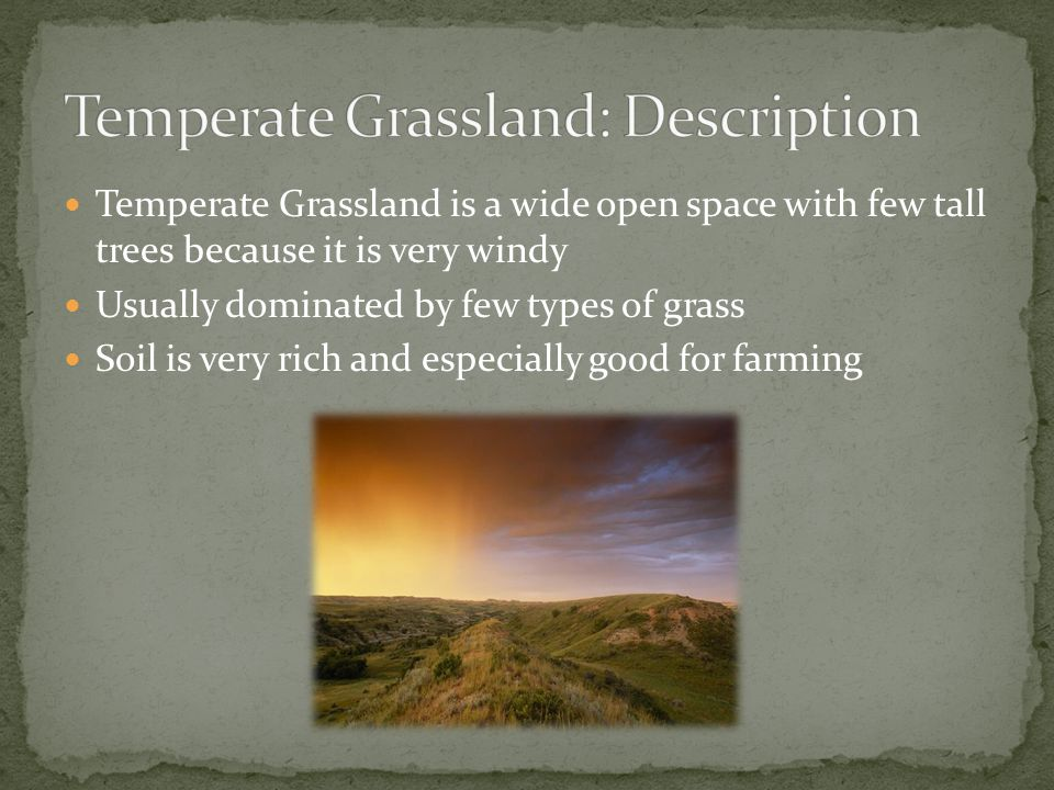 Temperate Grassland: Description