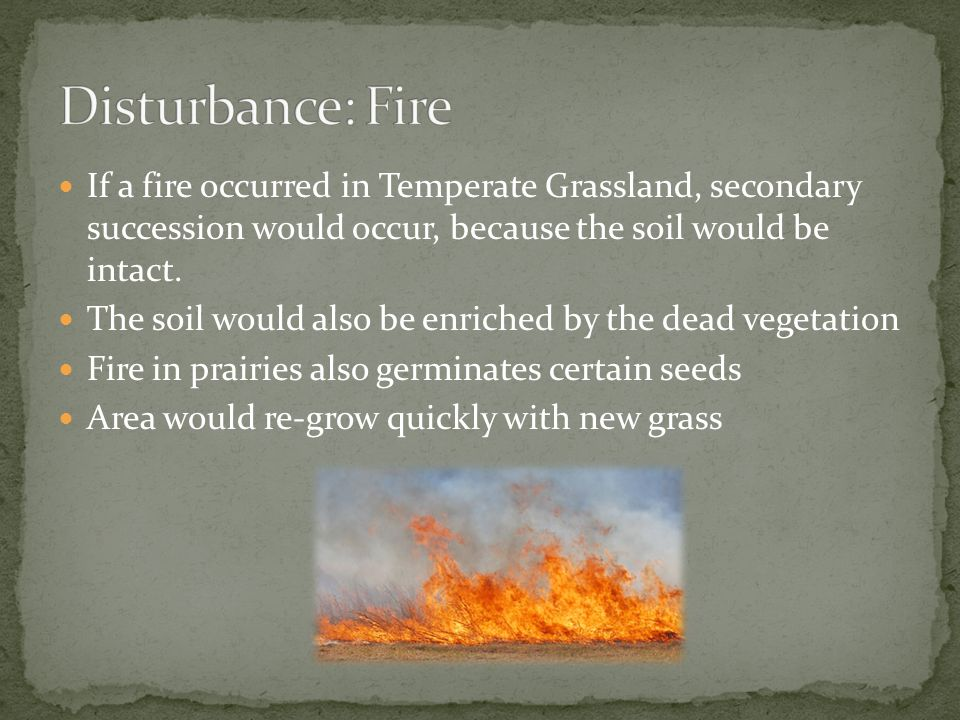 Disturbance: Fire If a fire occurred in Temperate Grassland, secondary succession would occur, because the soil would be intact.