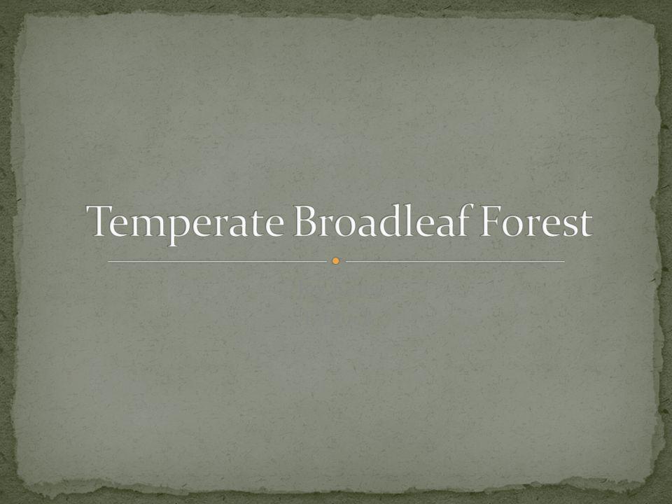 Temperate Broadleaf Forest