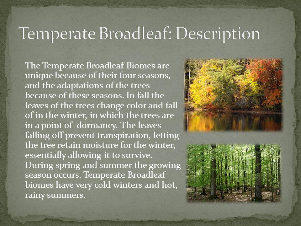 Temperate Broadleaf: Description