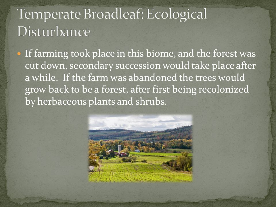 Temperate Broadleaf: Ecological Disturbance