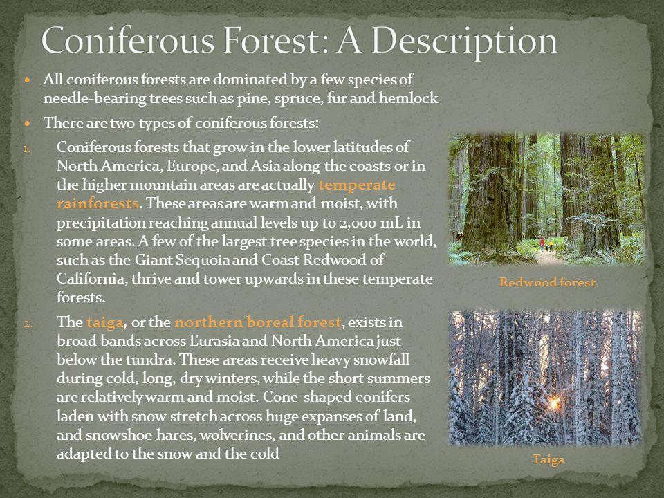 Coniferous Forest: A Description