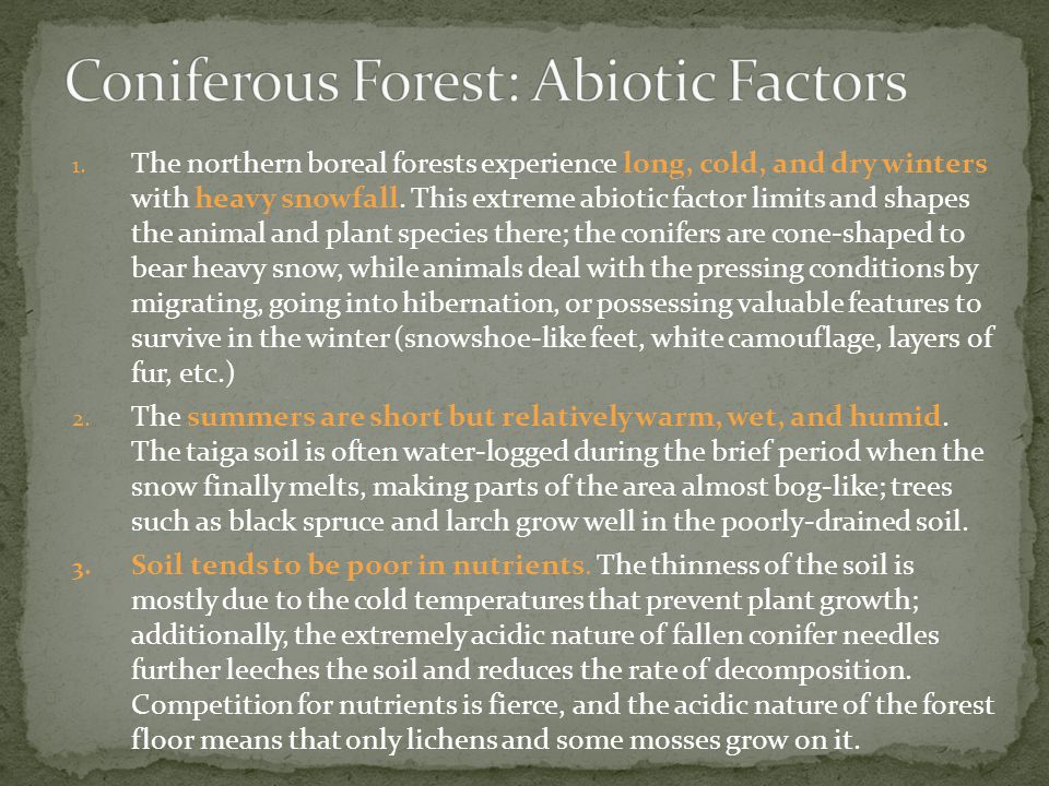 Coniferous Forest: Abiotic Factors