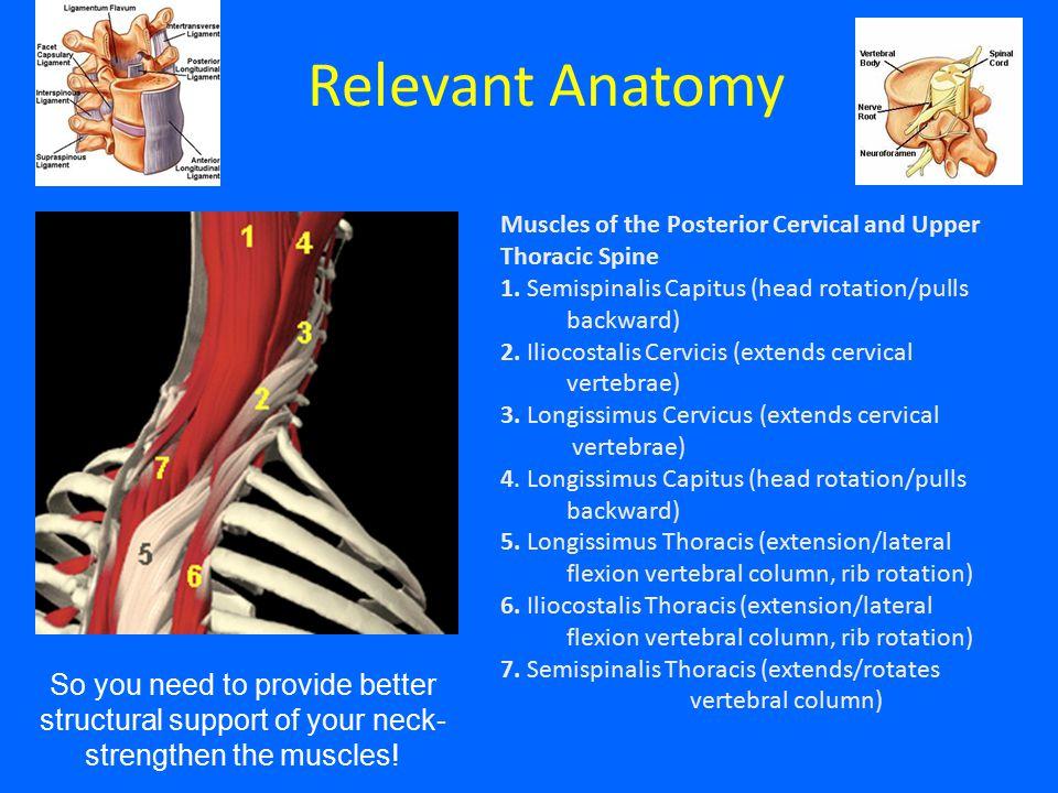 Relevant Anatomy