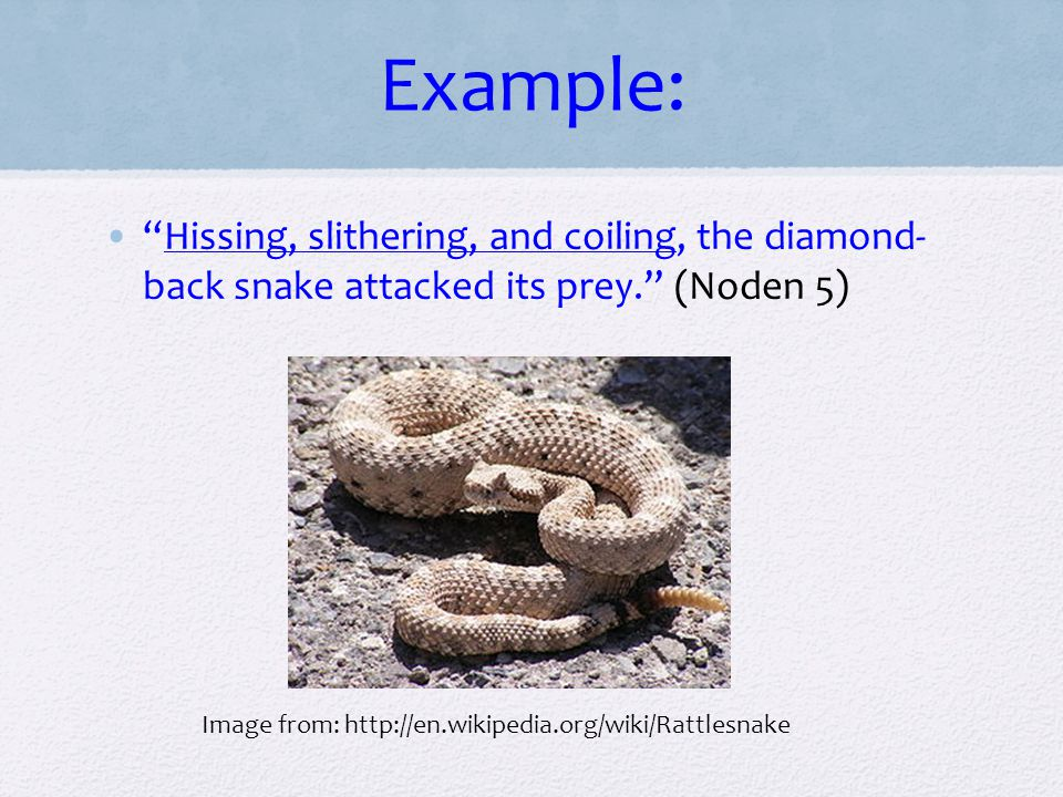 Example: Hissing, slithering, and coiling, the diamond- back snake attacked its prey. (Noden 5)