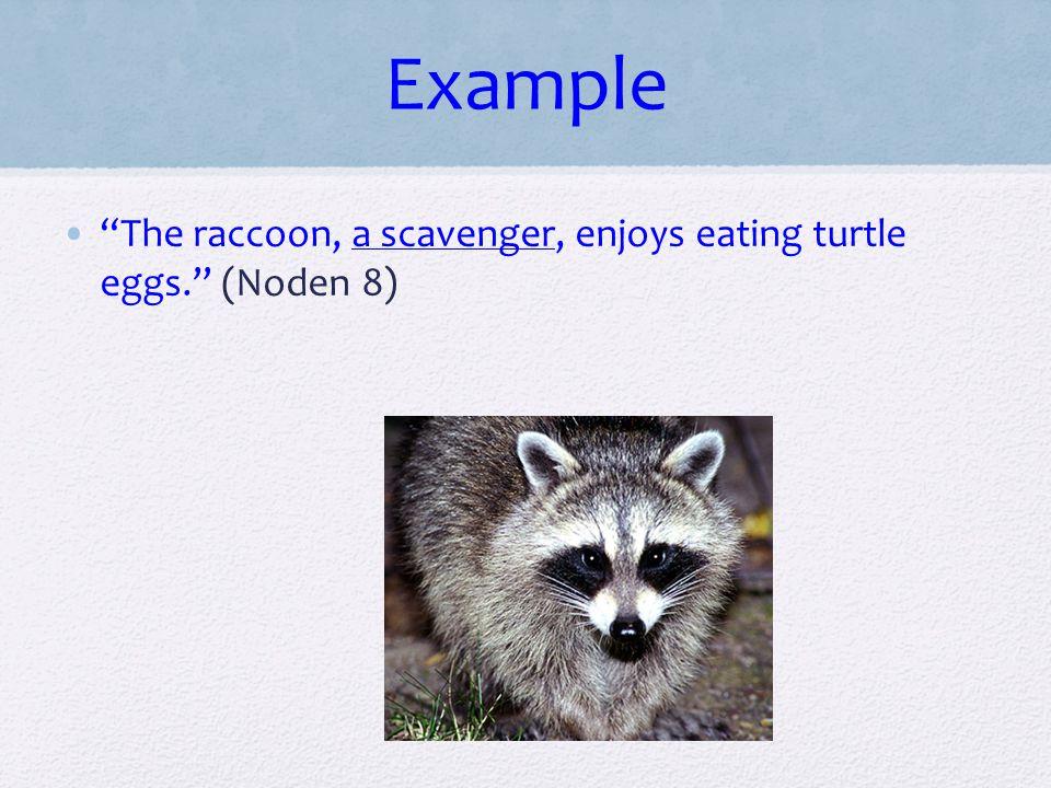 Example The raccoon, a scavenger, enjoys eating turtle eggs. (Noden 8)