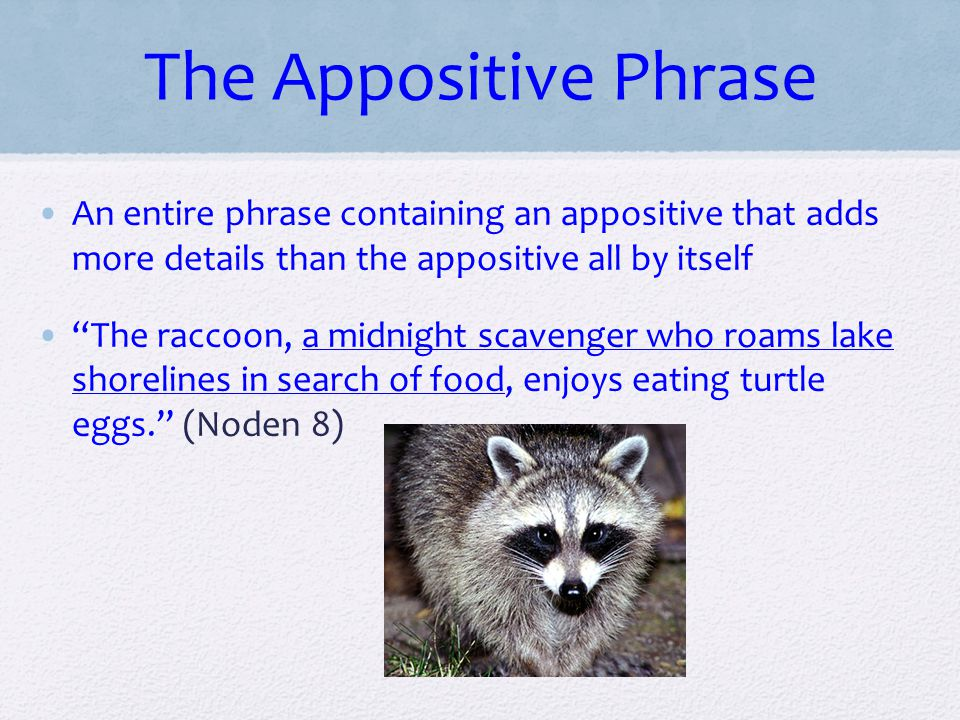 The Appositive Phrase An entire phrase containing an appositive that adds more details than the appositive all by itself.