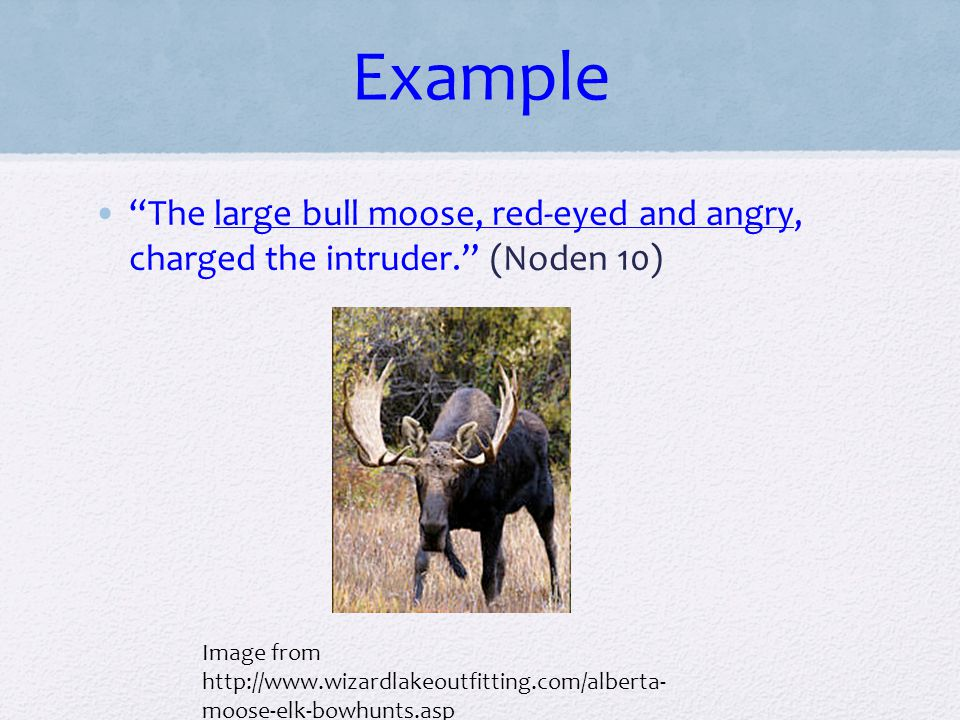 Example The large bull moose, red-eyed and angry, charged the intruder. (Noden 10)