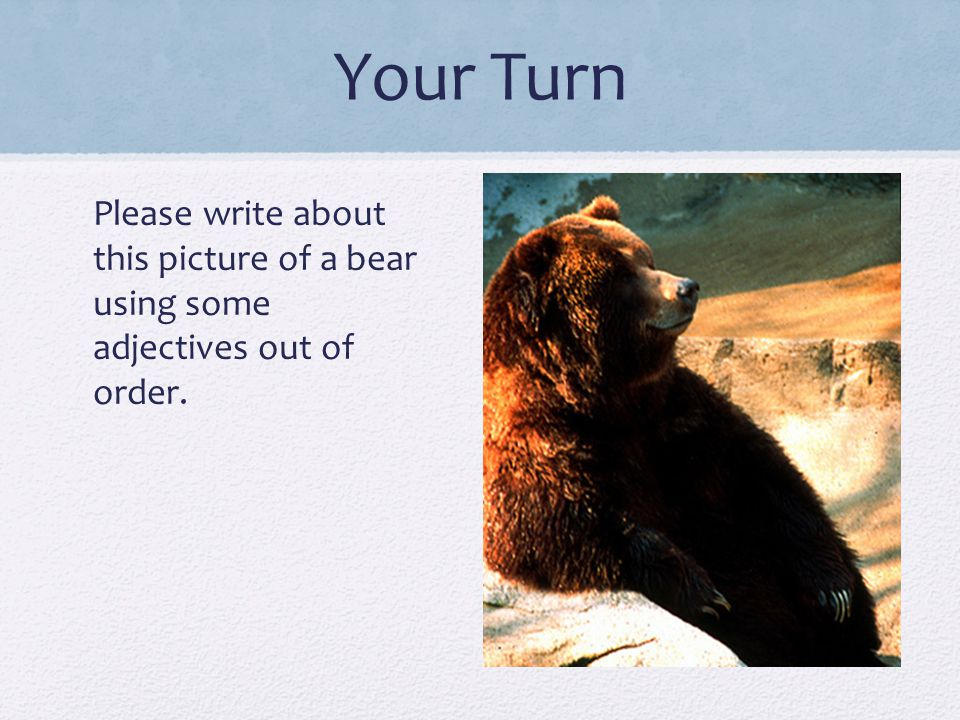 Your Turn Please write about this picture of a bear using some adjectives out of order. ----- Meeting Notes (7/3/12 10:39) -----