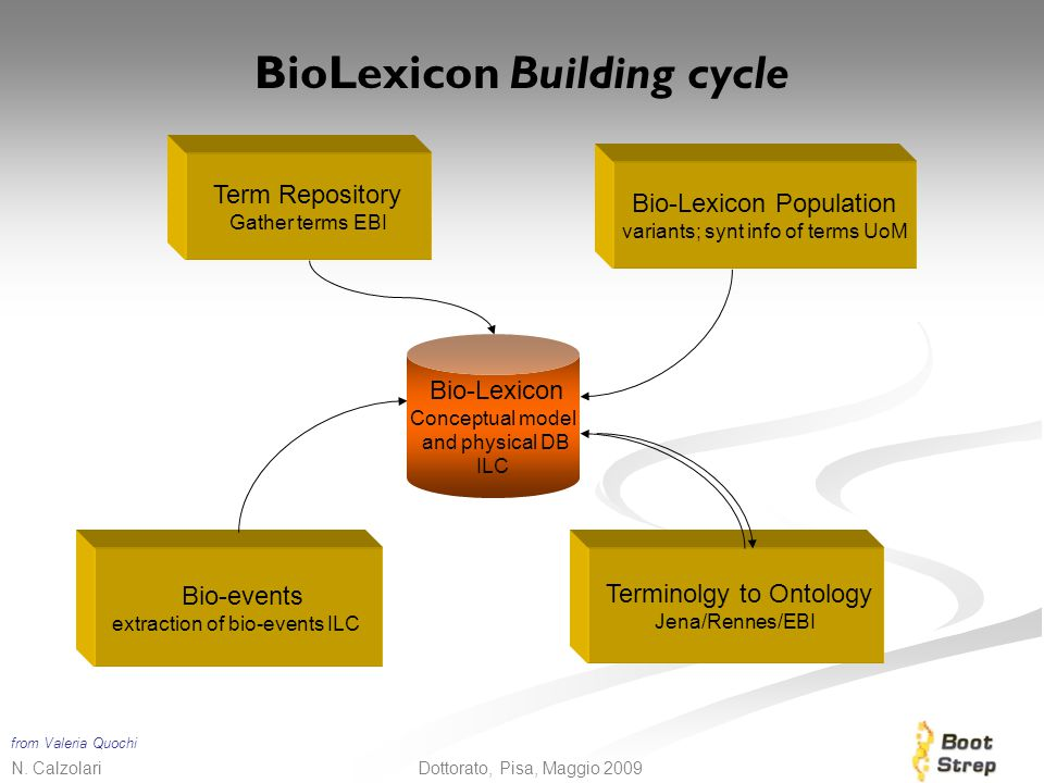 BioLexicon Building cycle