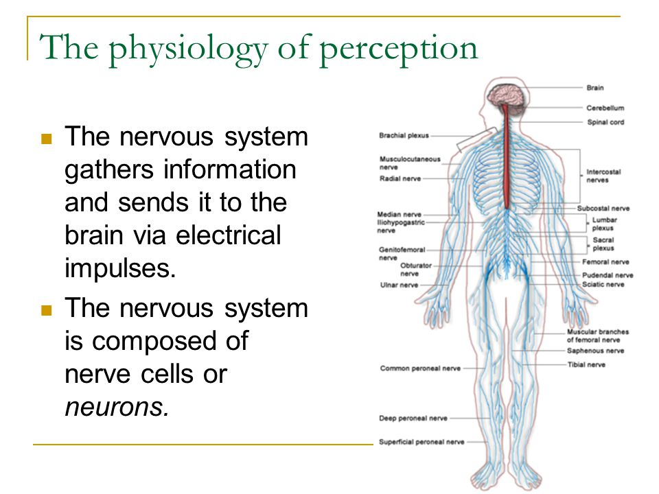 The physiology of perception