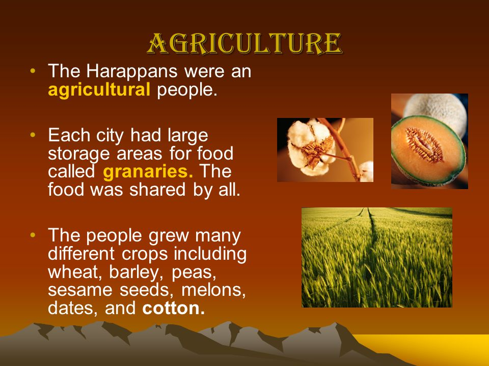 Agriculture The Harappans were an agricultural people.