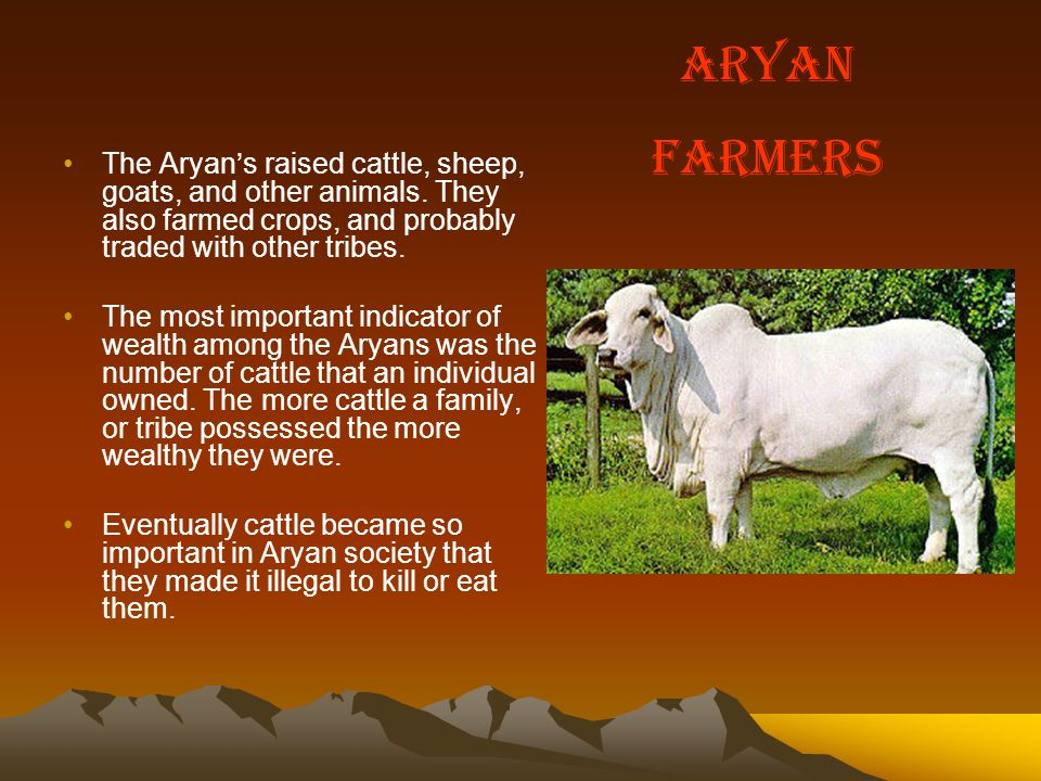 Aryan Farmers. The Aryan's raised cattle, sheep, goats, and other animals. They also farmed crops, and probably traded with other tribes.