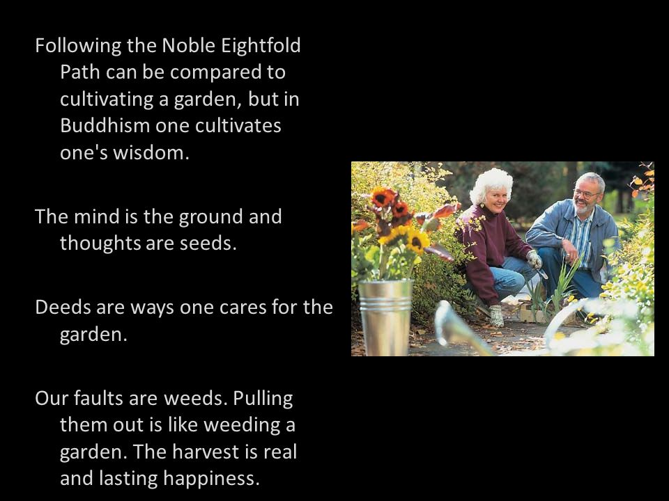 Following the Noble Eightfold Path can be compared to cultivating a garden, but in Buddhism one cultivates one s wisdom.