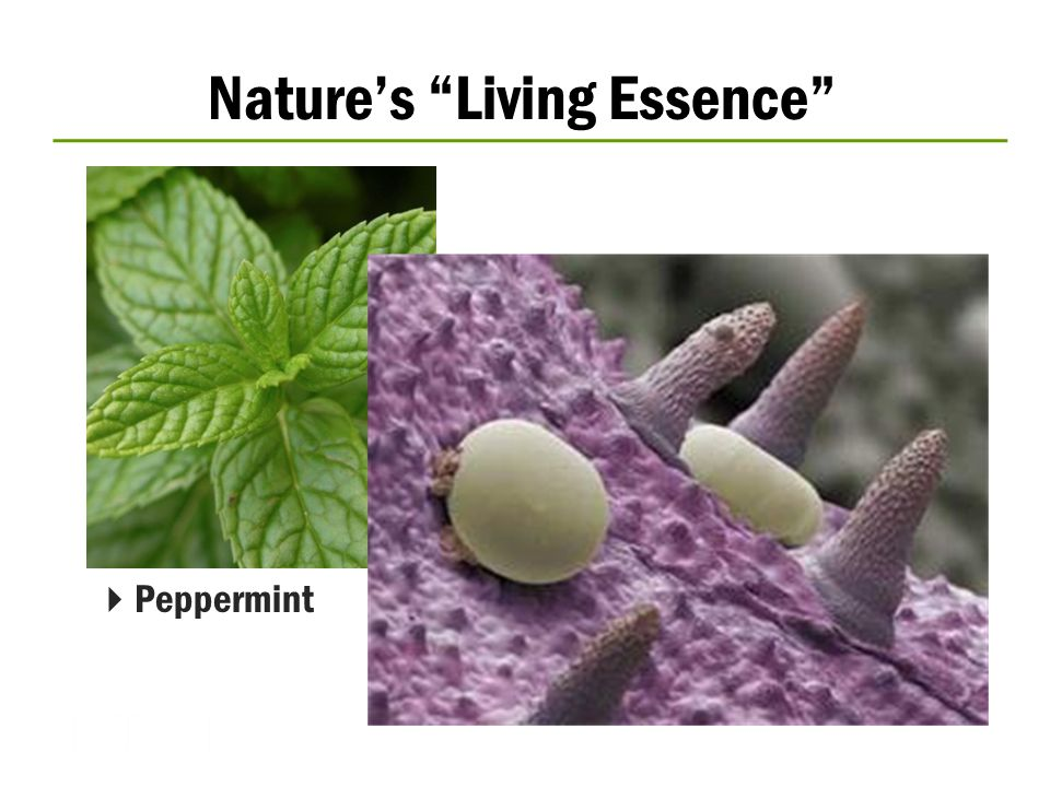 Nature's Living Essence