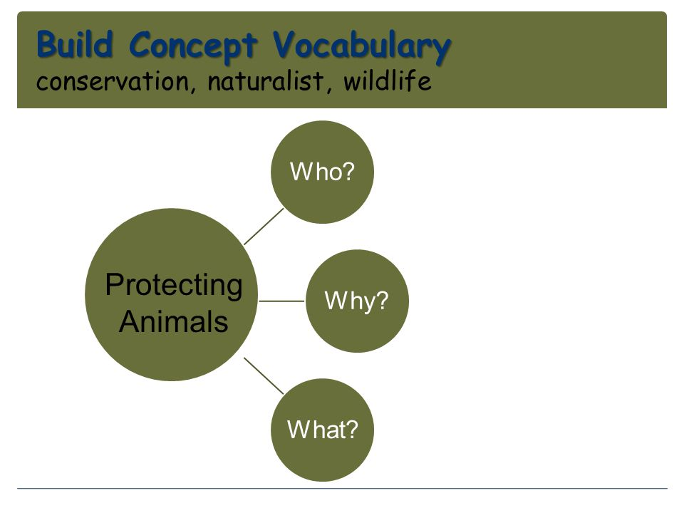 Build Concept Vocabulary conservation, naturalist, wildlife