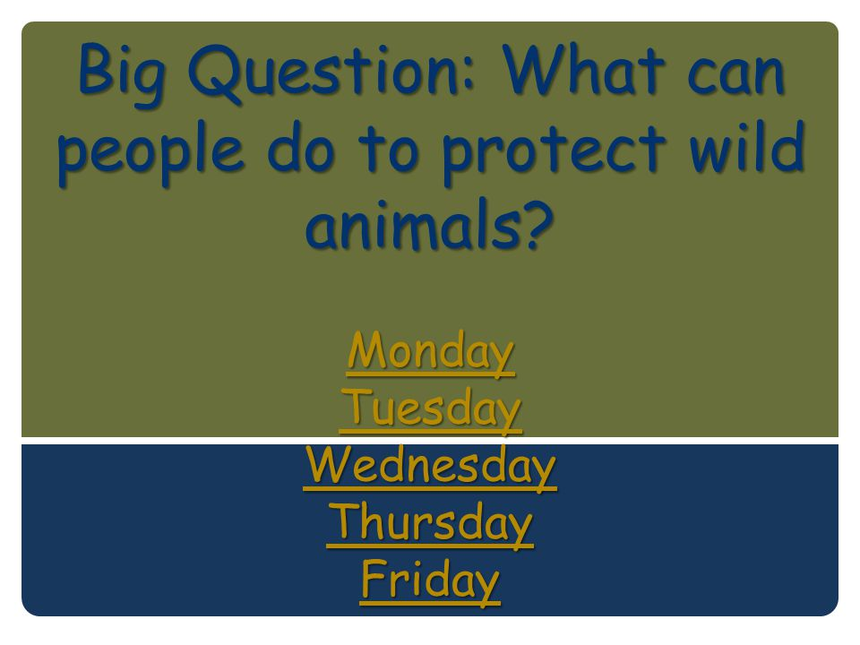 Big Question: What can people do to protect wild animals