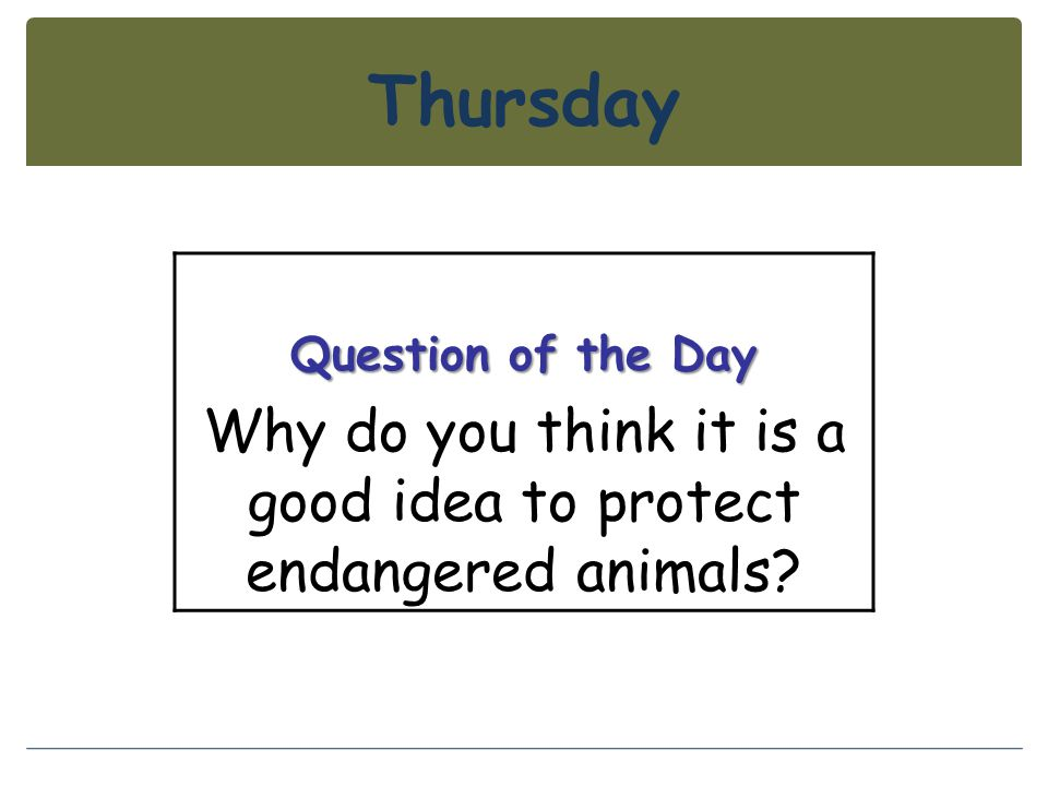 Why do you think it is a good idea to protect endangered animals